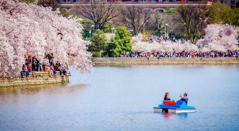 Cherry Blossoms Tidal Basin