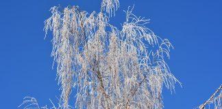 Blauer Himmel Baum Winter Frost Raureif Natur