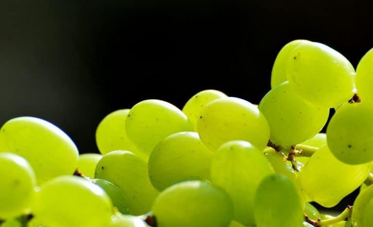 Mit Weintrauben gegen Arthritis