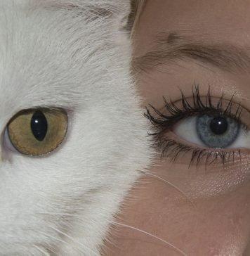 Augen Katze Gesicht Mädchen Menschlichen Katzen