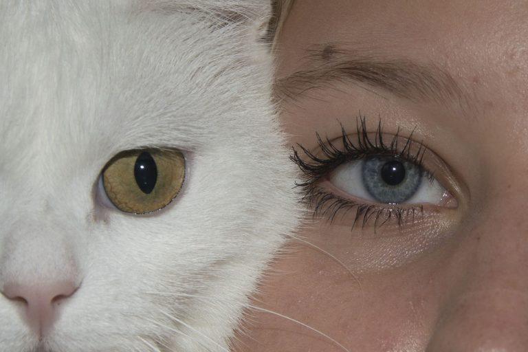 Katze löst den Partner ab – zwischenmenschliche Partnerschaft sinkt dramatisch