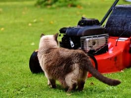 Rasenmäher Katze Neugierig Rasen Wiese Hauskatze
