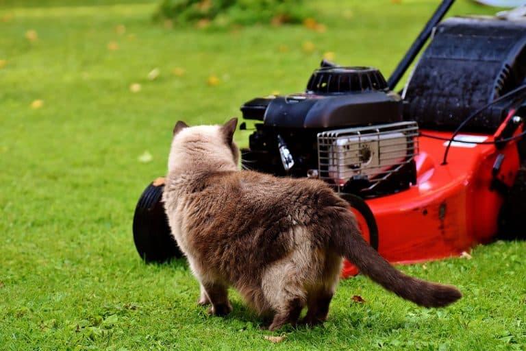 Mäh! sagt das Schaf zum Rasenmäher