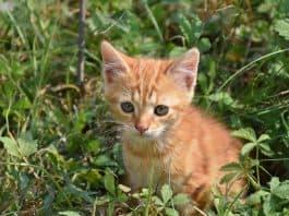 Katze Junge Katze Verspielt Haustier Rot Weiß