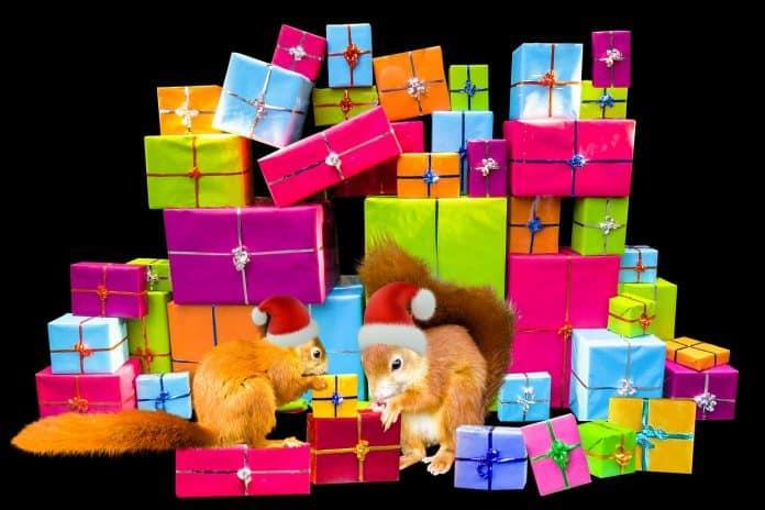 Emotionen Weihnachten Weihnachtszeit Geschenke