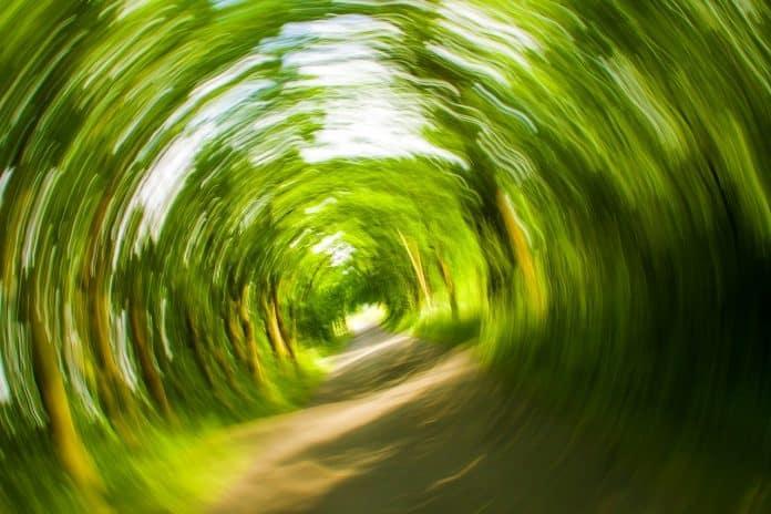 Bäume Weg Natur Wirbel Drehen Schwindelig