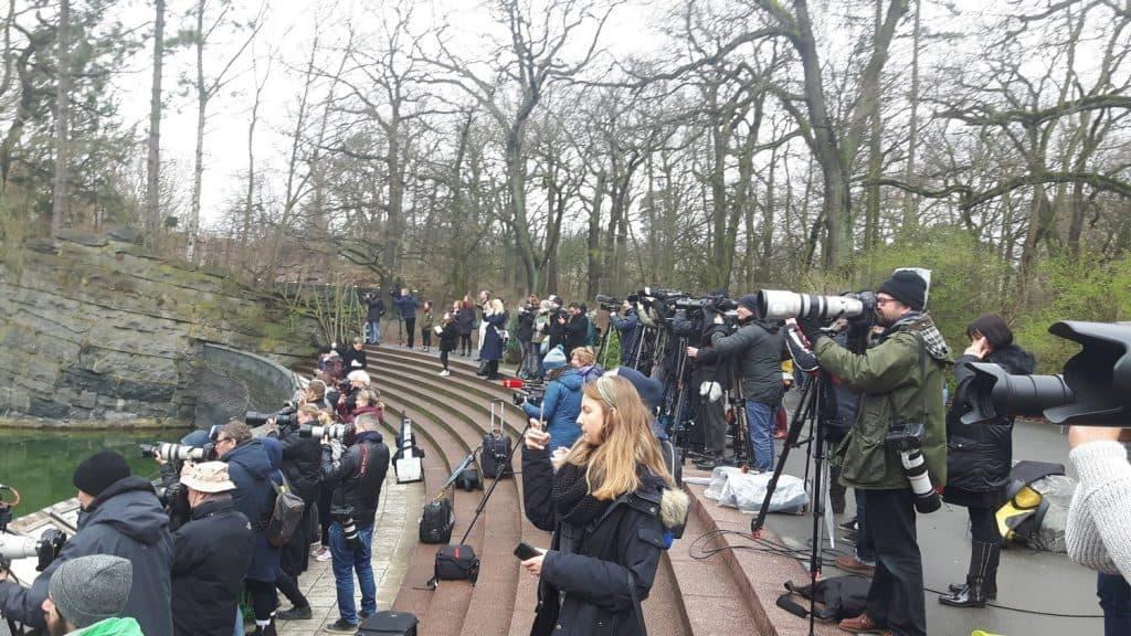 Medien vor der Eisbärenanlage Tierpark Berlin (Foto: Hans-Peter Gaul). Eisbärbaby Berlin.