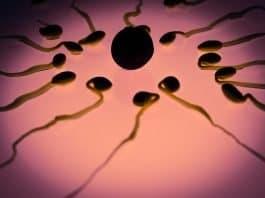 spermien eizelle befruchtung geschlechtszelle