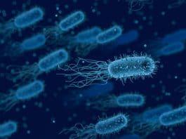 Bakterien Medizinische Biologie Gesundheit Anatomie