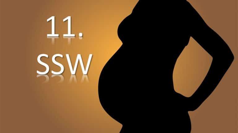 11. SSW – 11. Schwangerschaftswoche