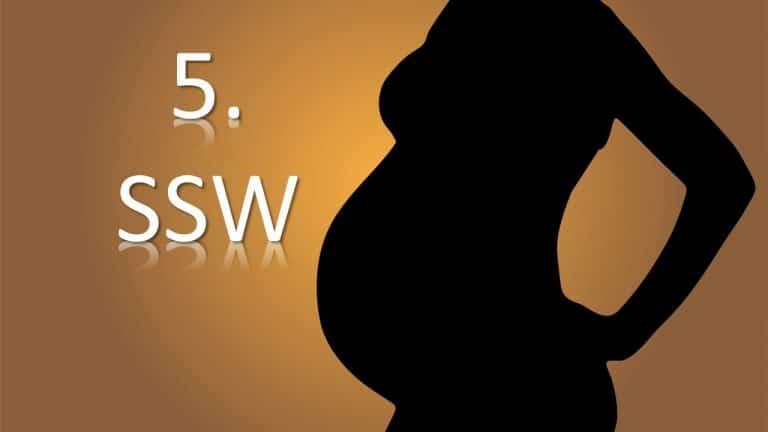 5. SSW – 5. Schwangerschaftswoche