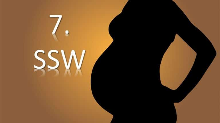 7. SSW – Schwangerschaftswoche