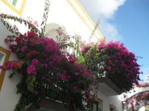 Gran Canaria - Ein Urlaubsparadies für Familien mit Kindern 5