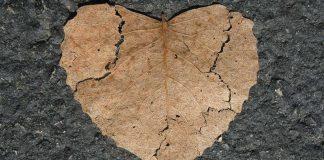 Herz Gebrochen Naturliebe Form Blatt Herbst