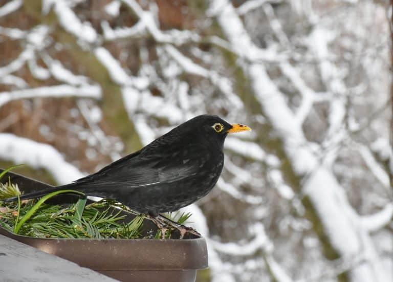 Jubel, Trubel, Heiterkeit im kleinen Vogelhaus – Vögel im Winter füttern