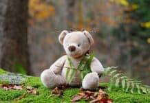 teddybär bär kuscheltier kinderspielzeug wald