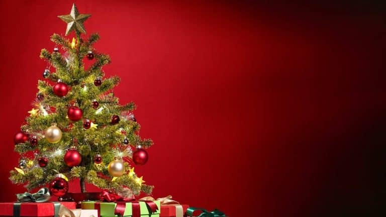 Alle Jahre wieder – Giftige Weihnachtsbäume zum Fest der Liebe