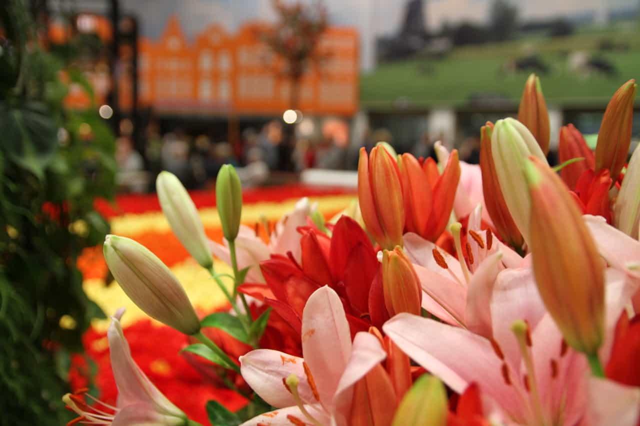 Blumenhalle Grüne Woche