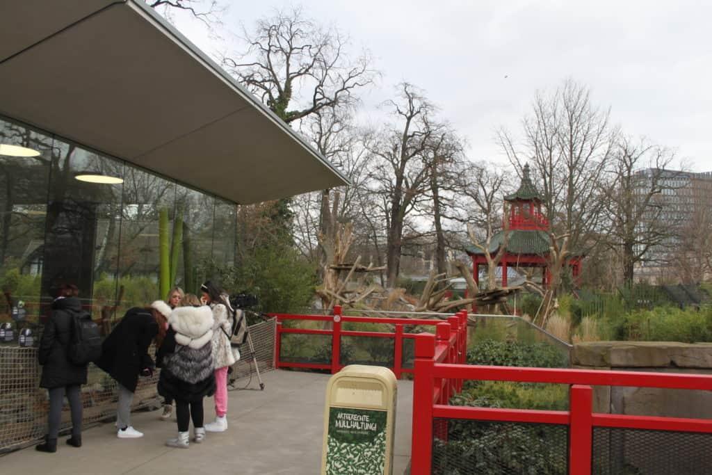 Zoo Berlin Panda Garten