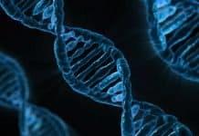Dna Biologie Medizin Gen Mikrobiologie Analyse