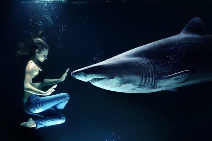 Haifisch tauchen im Meer