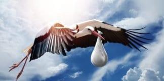 Vogel Natur Flügel Himmel Flug Storch Fliegen