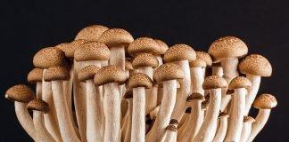 Pilz Pilze Viele Lebensmittel Vegetarier Bio Diät