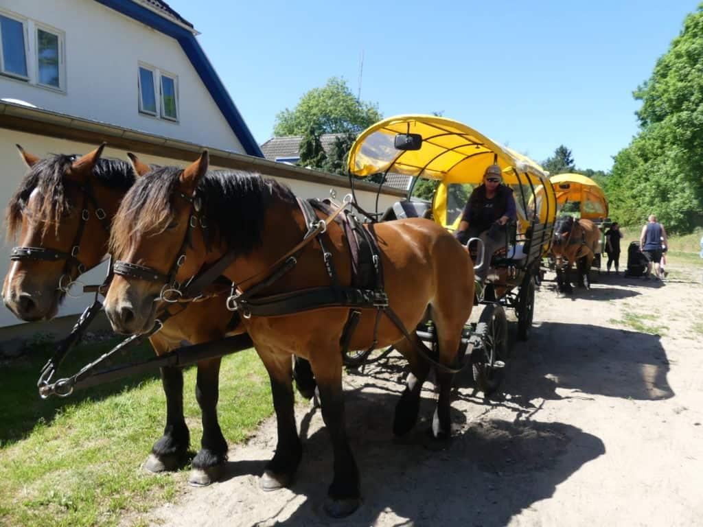 Pferdekutschen warten auf Touristen Insel Hiddensee