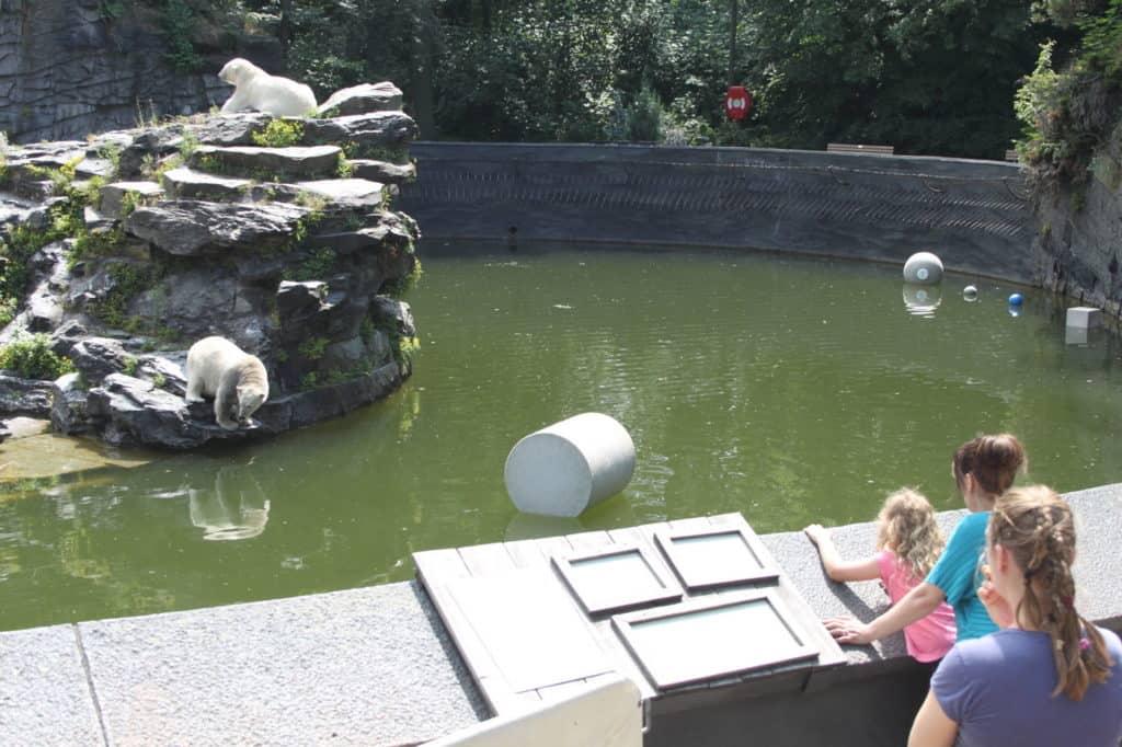 Tierpark Berlin (Eisbären-Anlage mit Hertha)