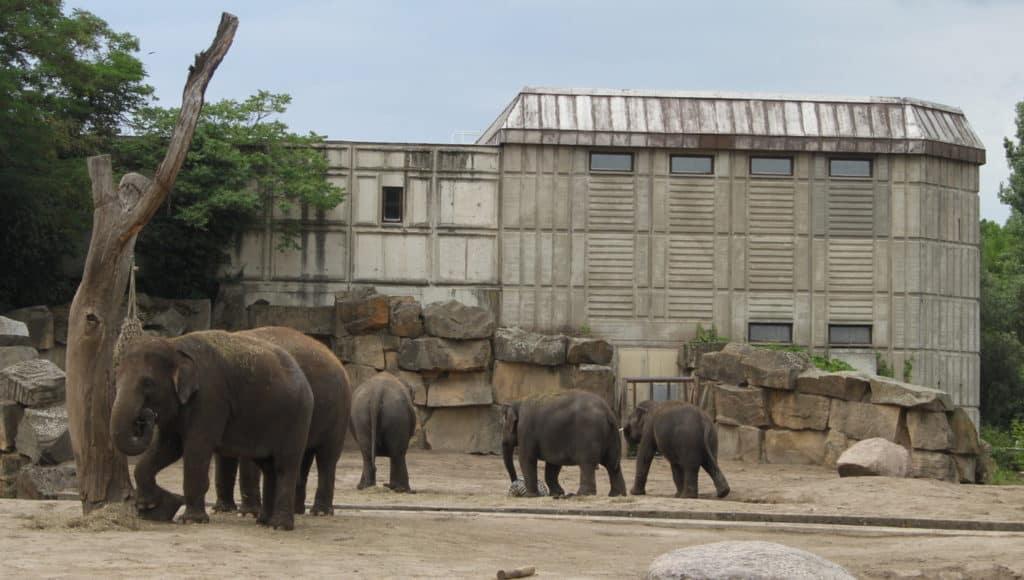Tierpark Berlin (Elefanten 4)