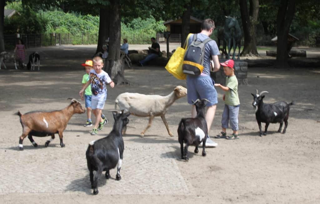 Tierpark Berlin (im Streichelzoo 1)k