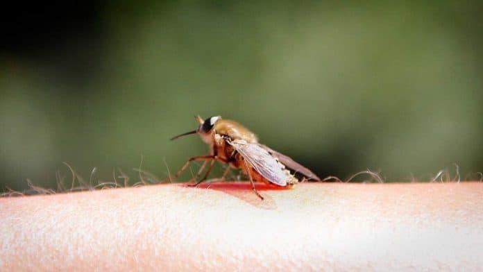 Erste durch Mücken übertragene West-Nil-Virus-Erkrankung beim Menschen in Deutschland 1