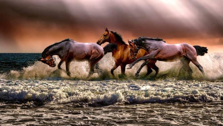 5 Tipps zum Pferdekauf aus der Praxis