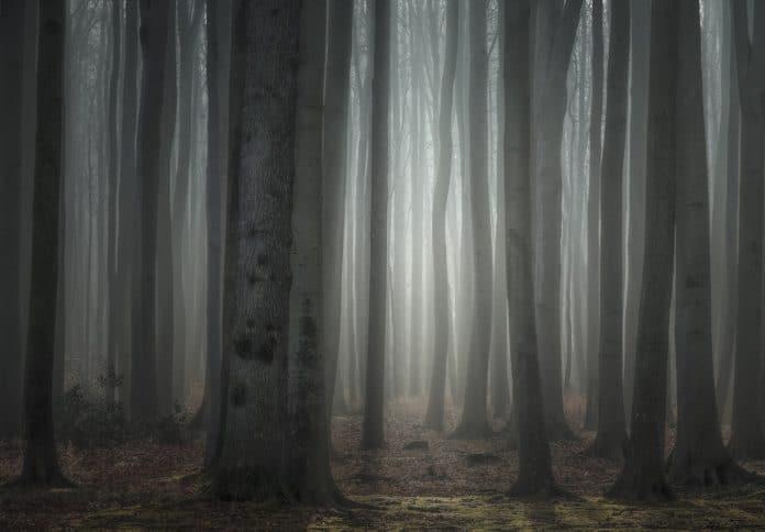 natur,wald,bäume,licht,morgen,morgenstimmung,geäst,baumstamm,gespensterwald,nienhagen,