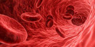 Nabelschnurblut mit Stammzellen: blut, zellen, rot