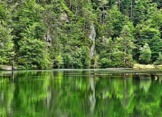 Natur Wald Gewässer Gebirgswald Holz Sommer See