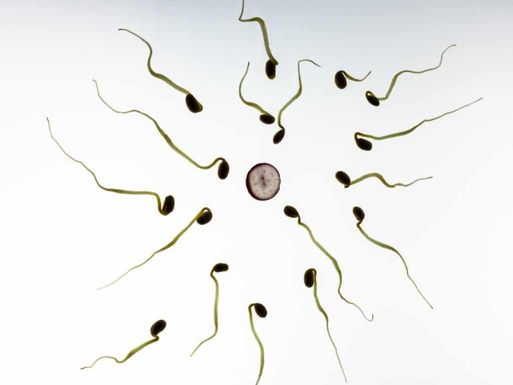 Was ist der beste Abstand zwischen zwei Schwangerschaften?: spermien, befruchtung, schwangerschaft