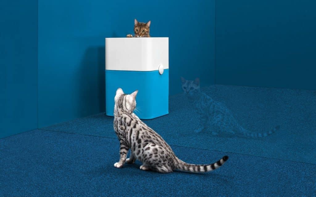 Luftreiniger im Test auch mit Katzen