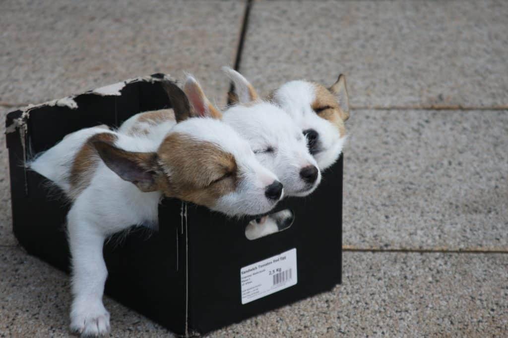 Geschenke einpacken Variante Schuhkarton als Geschenkverpackung : tiere, hunde, welpen