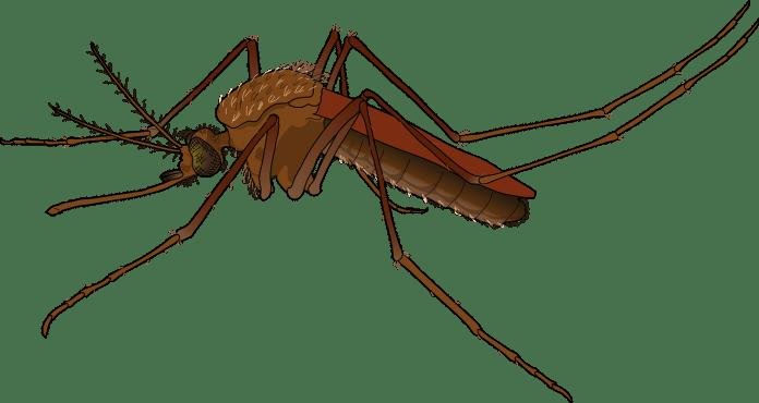 Brazilien Gesundheit Moskito Nachrichten Virus Die