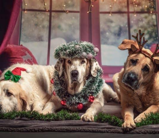hund, weihnachten, geschenke