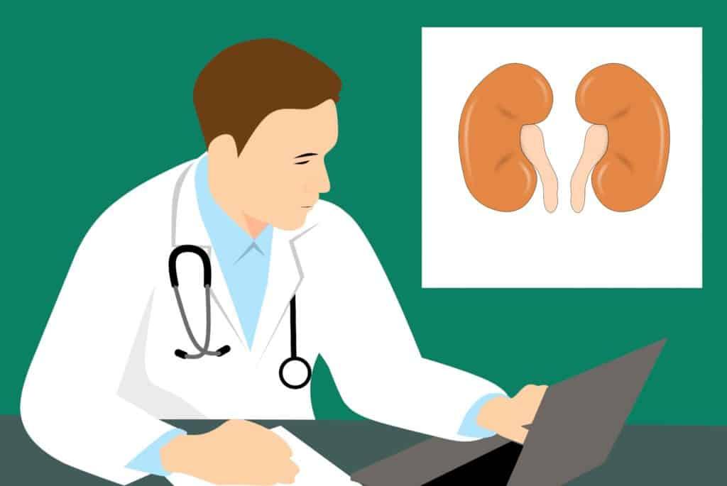 Riechender Urin in der Schwangerschaft. Besondere Färbung und Geruch des Urins in der Schwangerschaft: niere, anatomie, biologie