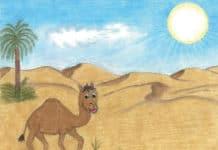 SINDBAD – die Geschichte vom Kamel-Jungen aus Oman