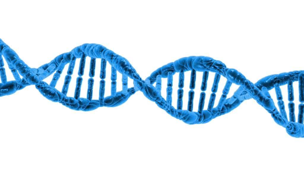 Lipoprotein a ist ein Eiweißkörper, dna, biologie, wissenschaft