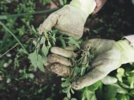 Gartenarbeit Landwirtschaft Gras Pflanze Feld